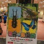 あべのハルカスで開催中!!世界のカブトムシ大集合、自由研究のネタ探しに世界の昆虫展へ!!