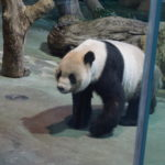 子連れ台湾・台北旅行記☆5歳1歳おすすめ観光スポット『台北市立動物園』